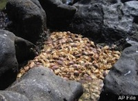 12-DEAD-CRABS-large.jpg