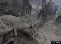 3-DEAD-CATTLE-VIETNAM-large.jpg