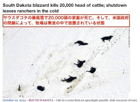 cattle-2.jpg