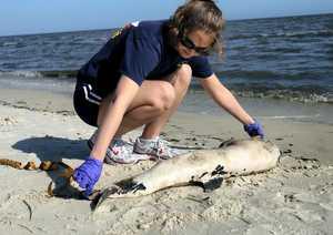dead-dolphin.jpg
