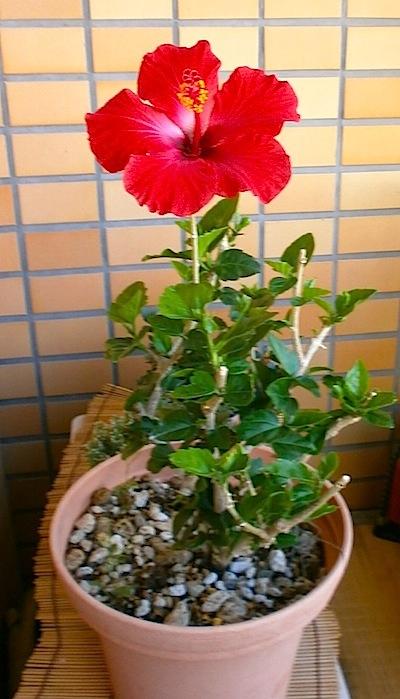 haibi-2013-05-30.jpg