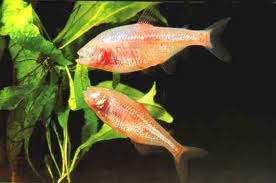 mexico-fish.jpg