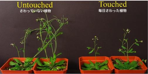 plant-01.jpg