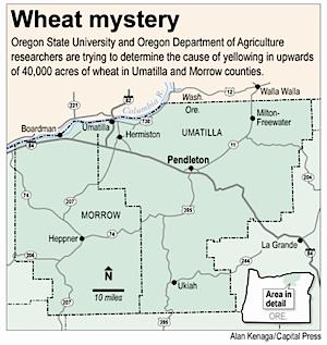 wheat-mystery.jpg