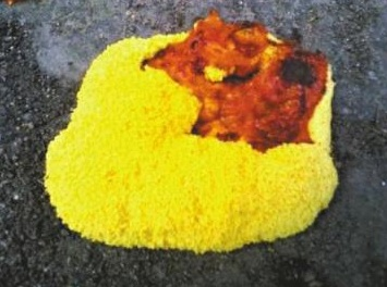 yellow-pancake-uf6.jpg
