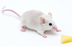 1-mouse.jpg