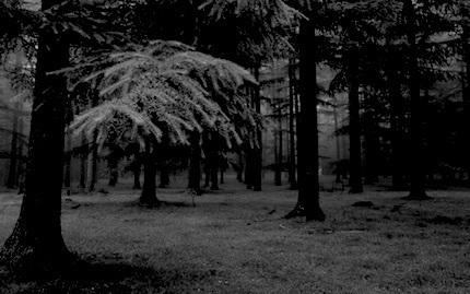 black-forest-01.jpg