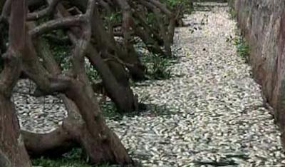 14-brasil-deadfish.jpg