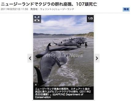 2011-nz-dolphins.jpg