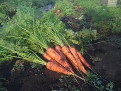 3-carrot.jpg