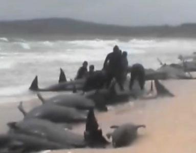 3-whale-death-telegragh.jpg