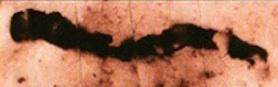 34-m-fossil.jpg