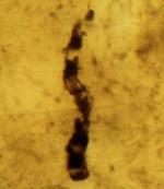 35-fossil.jpg