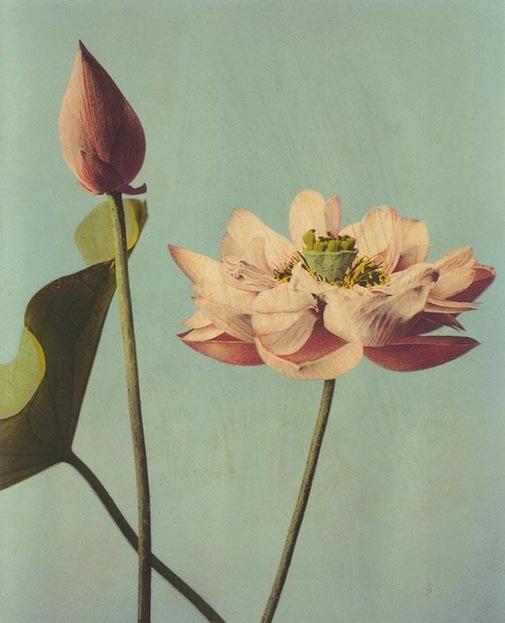 6-flowers.jpg