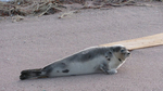 6-nl-beach-seal1.jpg