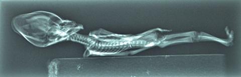 Atacama-Skelton-2.jpg