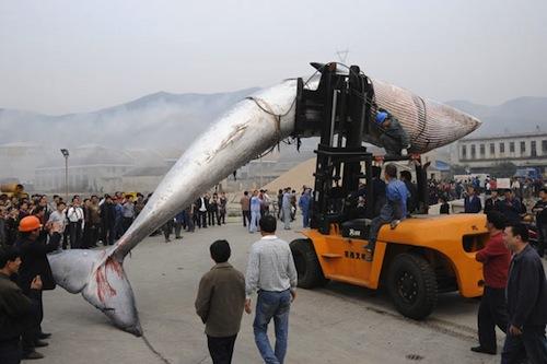 China_whale-3.jpg