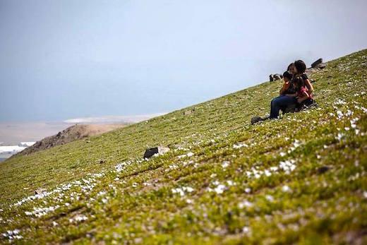 Flowering-desert-p1.jpg