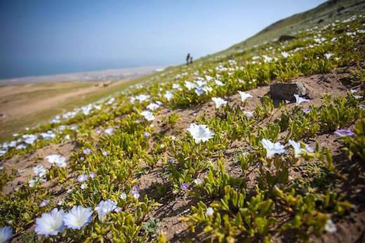 Flowering-desert-p3.jpg