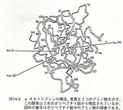 amino-3.jpg