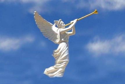angels-trumpet.jpg