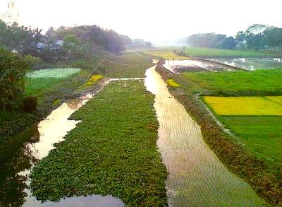 bangladesh-rural.jpg