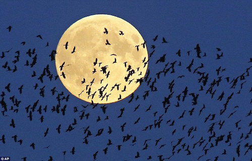 belarus-minsk-moon.jpg