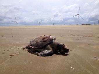 brasil-turtles.jpg