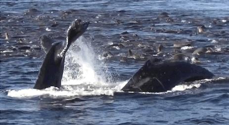 cal-whale-02.jpg