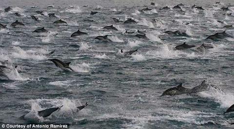 dolphin-2013-03.jpg