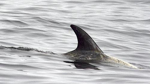 dolphin_6.jpg