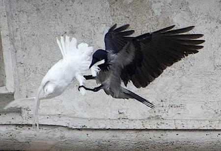 dove-attack-02.jpg