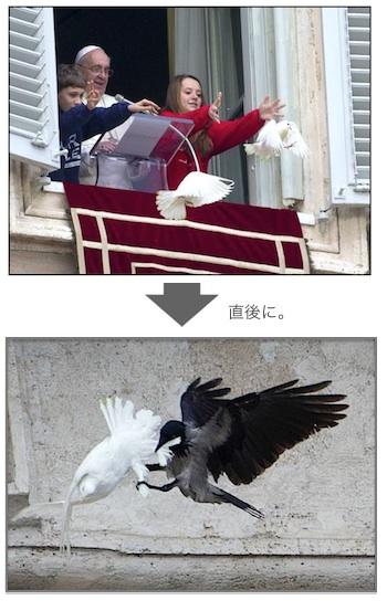 dove-attack-03.jpg