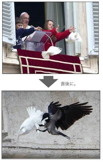 dove-attack-05.jpg