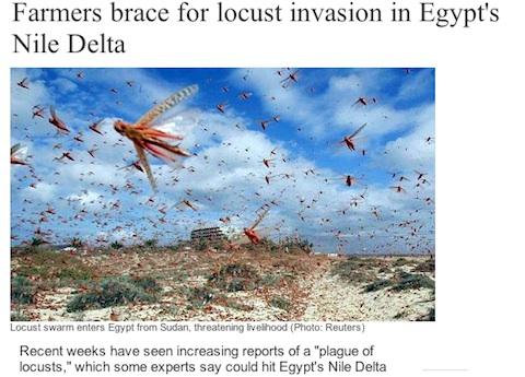 egypt-locust.jpg