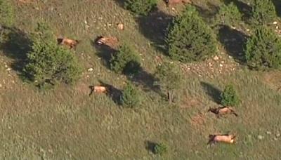 elk-dead-01.jpg