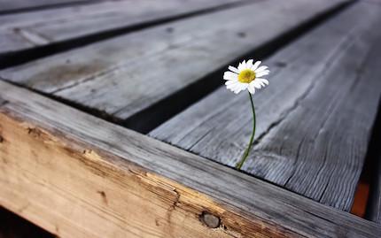 flower-top.jpg