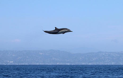 flying-dolphin-top.jpg