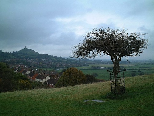 glastonbury-holythorn.jpg