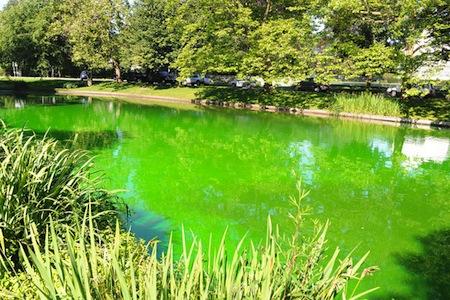 green-0702.jpg