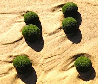 green-ball.jpg