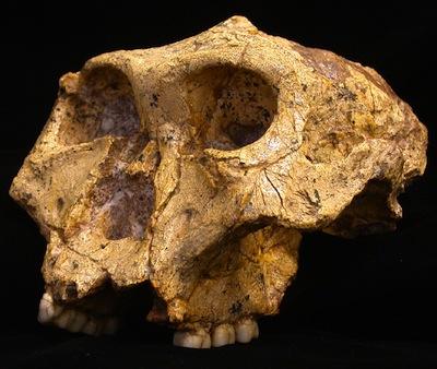 hominin-2.jpg