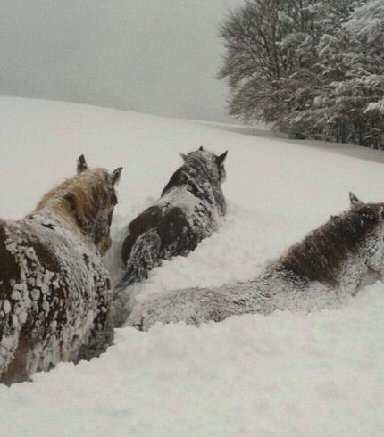 horse-spain-01.jpg