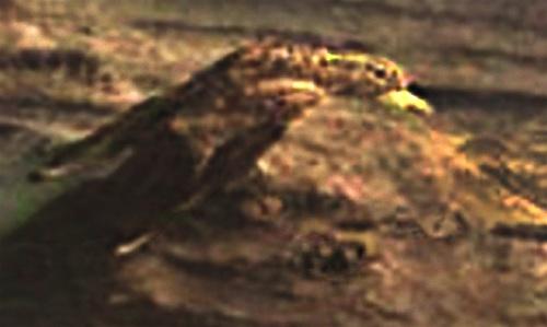 iwa-2.jpg