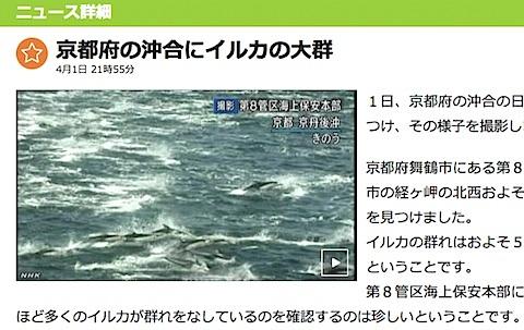 kyoto-dolphin.jpg