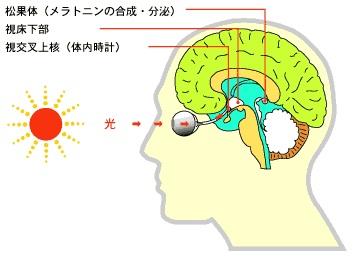 light-brain.jpg