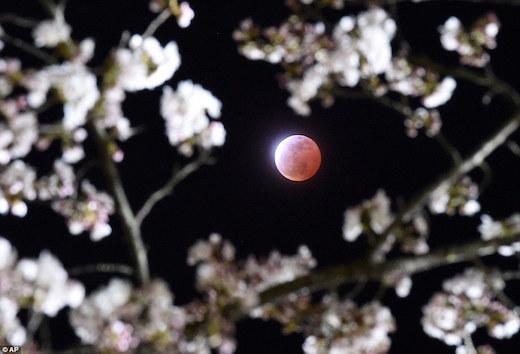 miyagi-moon.jpg