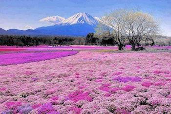 mt-fuji-flower.jpg