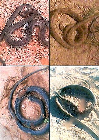 namibia-snake.jpg