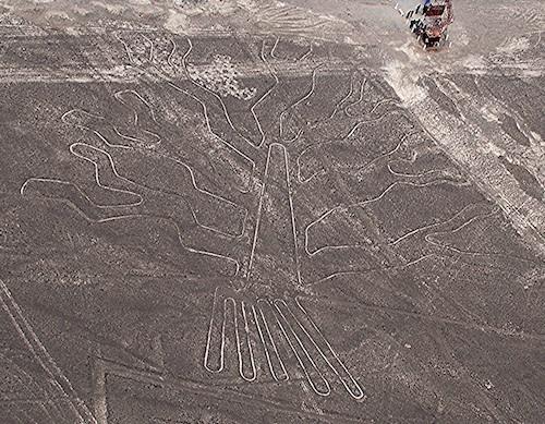 nasca-tree-83.jpg